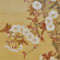 「御園桜」