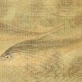 「藻鯉図」