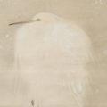 「雪中白鷺図」